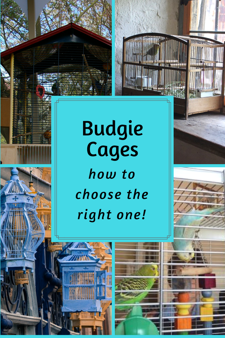Budgie Care 101