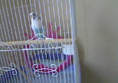 chillin in her cage!!!