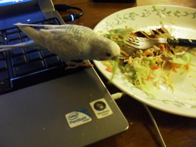 Fred stealing some of my salad.