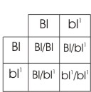 punnett square for green/blue x green/blue