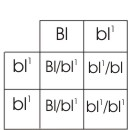 punnett square for green/blue x blue